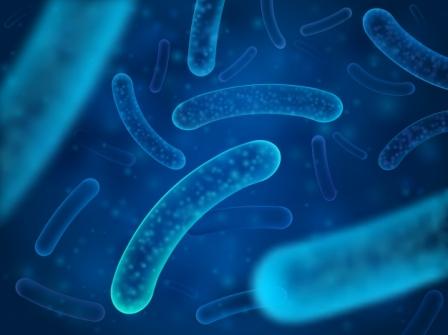 Imagem notícia Probióticos: como essas bactérias agem no seu intestino?